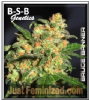 B-S-B Genetics Bruce Banner Female 5 Seeds